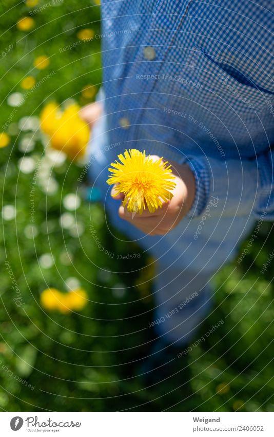 Gelbgold harmonisch Erholung ruhig Duft Kindererziehung Kindergarten Kleinkind Kindheit berühren Lächeln gelb Freude Glück Fröhlichkeit Zufriedenheit