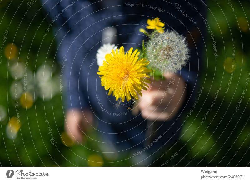 Blumenstrauß Leben harmonisch Wohlgefühl Zufriedenheit Kind Kleinkind Mädchen Junge Kindheit Natur Pflanze Blühend frisch gelb gold grün Freude Glück