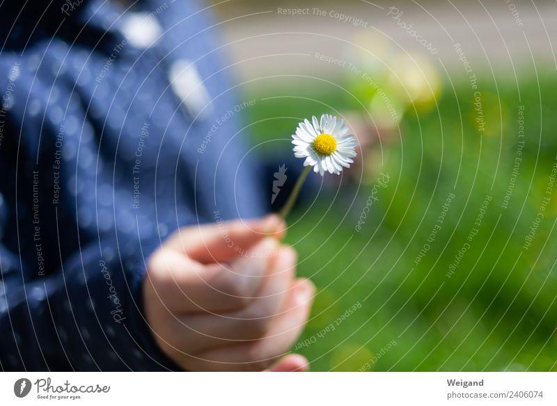 Dankeschön ruhig Meditation Duft Kindererziehung Kindergarten Kleinkind Mädchen Junge Hand berühren Lächeln lachen Freundlichkeit Fröhlichkeit grün Freude Glück