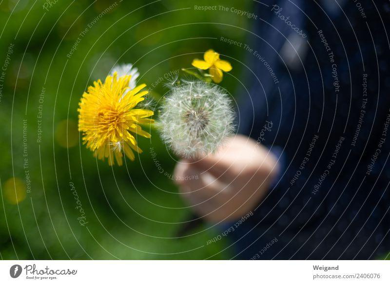 Blumengruß Leben harmonisch Wohlgefühl Zufriedenheit Sinnesorgane Erholung ruhig Kindergarten Kleinkind Mädchen Junge Kindheit Natur Pflanze Lächeln