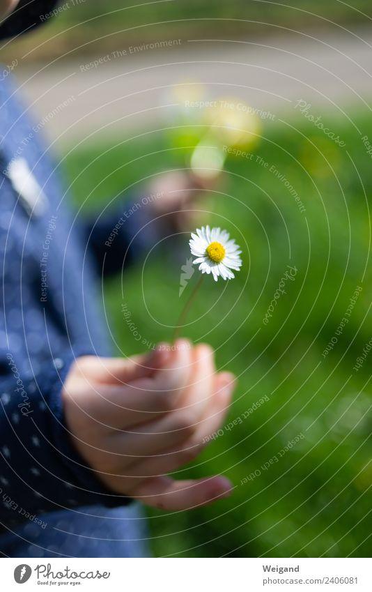 Dankeschön Gesundheit harmonisch Wohlgefühl Zufriedenheit Erholung ruhig Meditation Duft Kindererziehung Kindergarten Kleinkind Mädchen 1 Mensch 3-8 Jahre