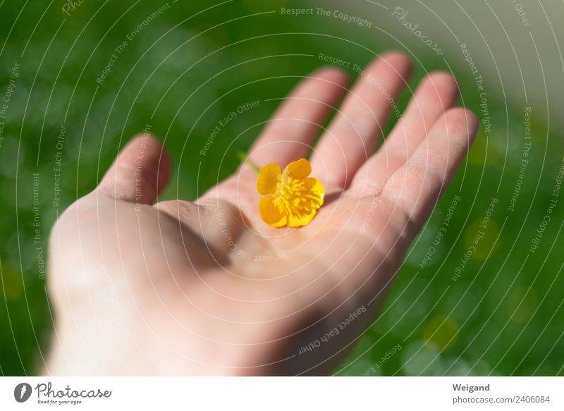 Blumenhand harmonisch Wohlgefühl Zufriedenheit Sinnesorgane Erholung ruhig Meditation Duft Sommer Sommerurlaub Hand genießen Schutz Geborgenheit loyal