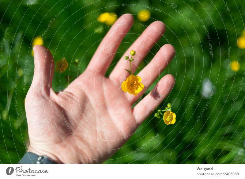 Blumenhand Wellness Leben harmonisch Wohlgefühl Zufriedenheit Sinnesorgane Erholung ruhig Meditation Duft Hand beobachten gelb grün Freude Glück Fröhlichkeit
