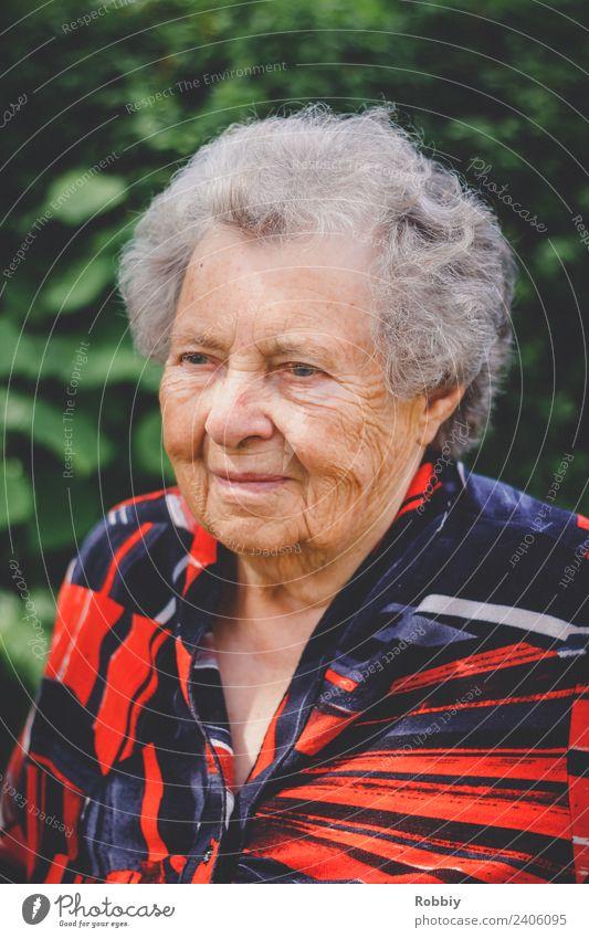 Großmütterchen III feminin Frau Erwachsene Weiblicher Senior Großeltern Großmutter Leben 1 Mensch 60 und älter alt authentisch Gesellschaft (Soziologie)
