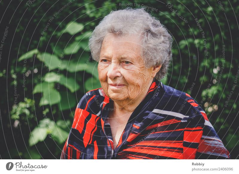 Großmütterchen IV feminin Frau Erwachsene Weiblicher Senior Großeltern Großmutter Leben 1 Mensch 60 und älter alt authentisch Gesellschaft (Soziologie)