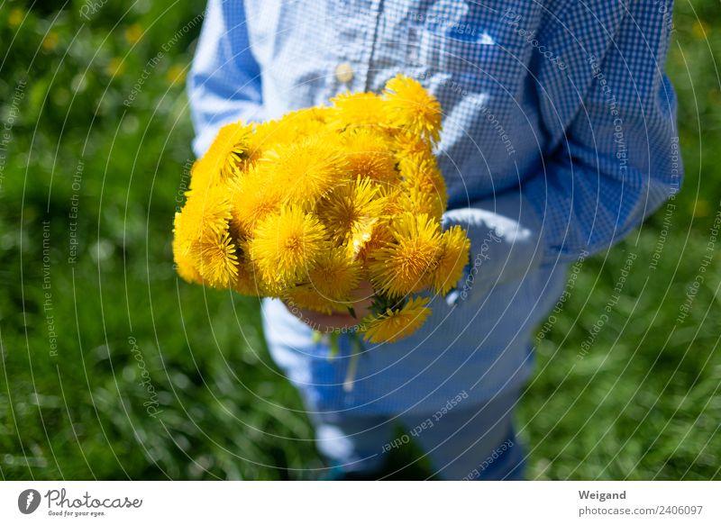 Gelbes Glück Kind grün Blume Erholung Freude Mädchen gelb Frühling Junge Zufriedenheit leuchten Kindheit Lächeln Fröhlichkeit Lebensfreude