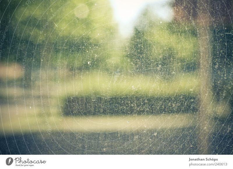 keine Aussicht auf Durchblick Natur grün Baum Fenster Glas dreckig kaputt Fensterscheibe Gegenwart unklar Fensterblick ungewiss Unschärfe Sehvermögen