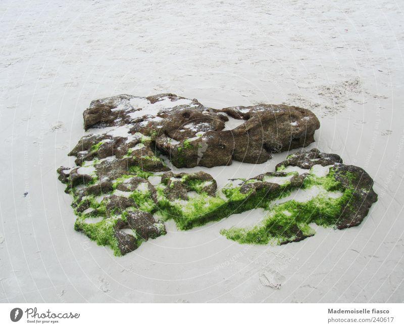 Herz aus Stein Sand Moos braun grau grün einzigartig Farbfoto Außenaufnahme Textfreiraum oben Textfreiraum unten Tag Vogelperspektive