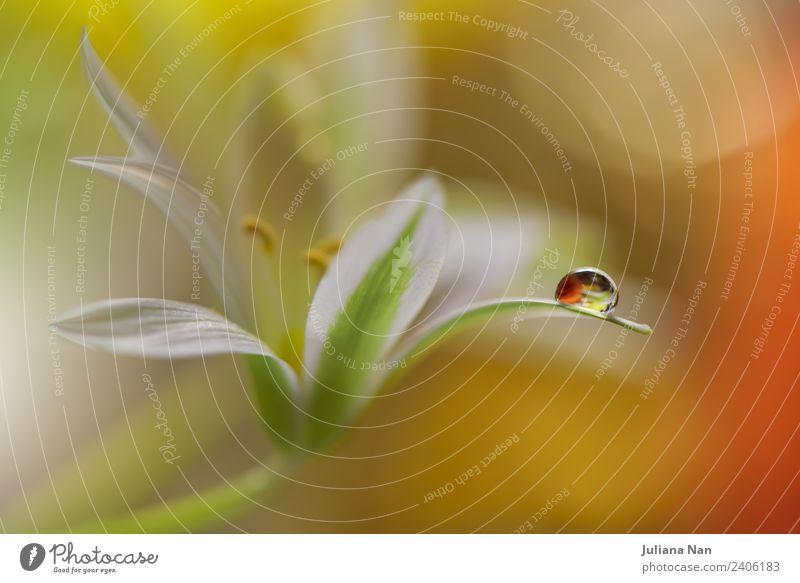 Natur Pflanze Wasser Blume Erholung gelb Umwelt natürlich Glück Kunst Stimmung Design träumen modern elegant ästhetisch