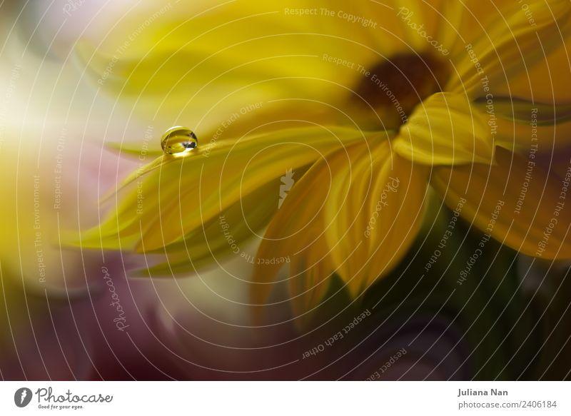Natur Sommer Pflanze schön Wasser Blume Lifestyle Innenarchitektur Liebe Stil Kunst Garten Feste & Feiern Stimmung Design Dekoration & Verzierung
