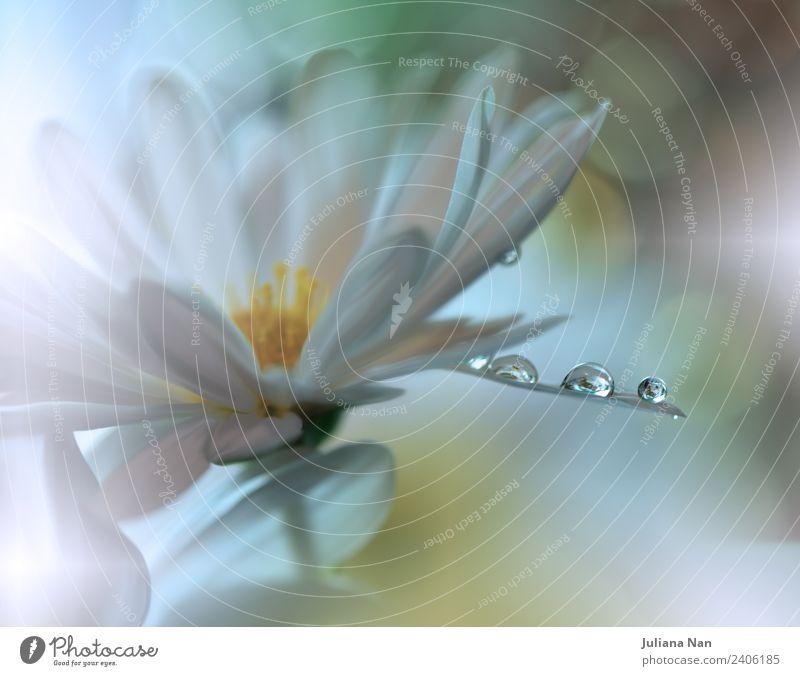 Natur Pflanze schön Wasser Blume Freude Lifestyle Umwelt Glück Kunst Stimmung träumen elegant Kreativität Wassertropfen fantastisch