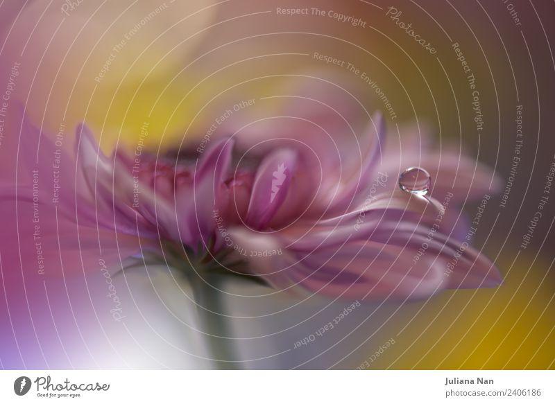 Natur Sommer schön Wasser Blume Erholung Lifestyle Innenarchitektur Stil Kunst Garten Stimmung Design träumen Dekoration & Verzierung elegant