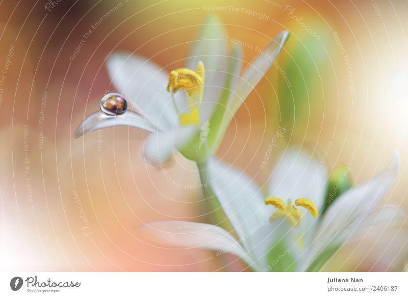 Sanftes romantisches künstlerisches Bild. Weicher pastellfarbener Hintergrund verschwimmt. Lifestyle elegant Stil Design schön Kunst Umwelt Natur Pflanze