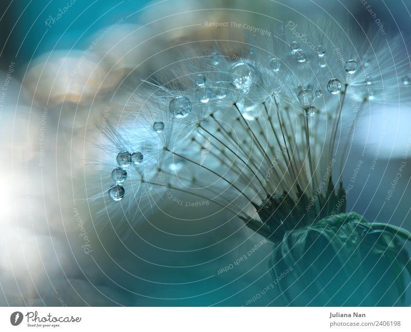 Natur Pflanze Farbe schön Wasser Blume Erholung Umwelt Liebe Stil Glück Stimmung Design träumen elegant ästhetisch