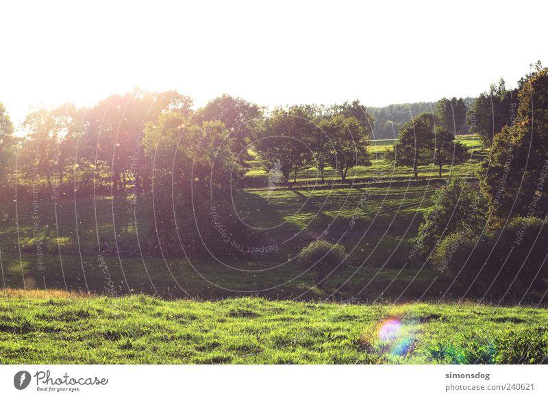 insektenwiese Himmel Natur grün Baum Sommer Landschaft Wiese Leben Wärme Gras hell Beleuchtung frisch Urelemente Sträucher einzigartig