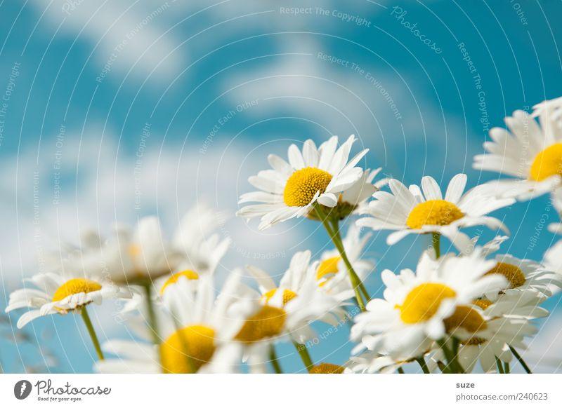 Vielen Dank Glück Leben Wohlgefühl Duft Sommer Garten Umwelt Natur Pflanze Himmel Frühling Schönes Wetter Blume Blüte Wiese Blühend Freundlichkeit Fröhlichkeit
