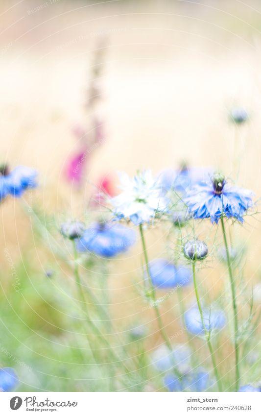 Gretel beim Tanz Natur blau grün schön Pflanze Sommer Blume Wiese Gras Garten hell Feld rosa Fröhlichkeit ästhetisch Romantik