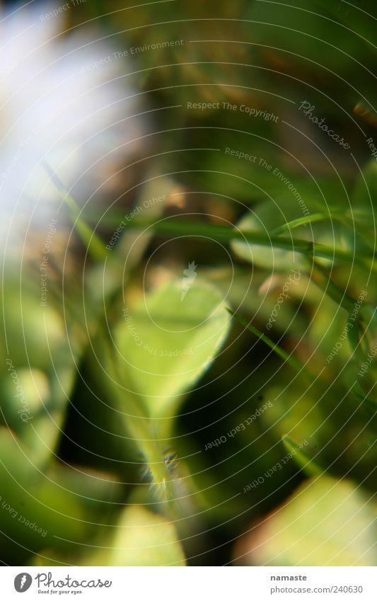 alles klar.... Natur Pflanze Tier Frühling Sommer Schönes Wetter Blume Blatt Blüte Leichtigkeit Farbfoto Außenaufnahme Makroaufnahme Menschenleer Unschärfe