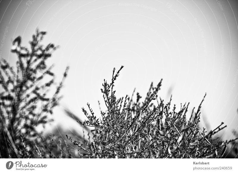 peripher. Natur Pflanze Einsamkeit Umwelt Wiese Bewegung Gras Garten Linie Stimmung Feld Nebel Sträucher Unwetter Sturm chaotisch