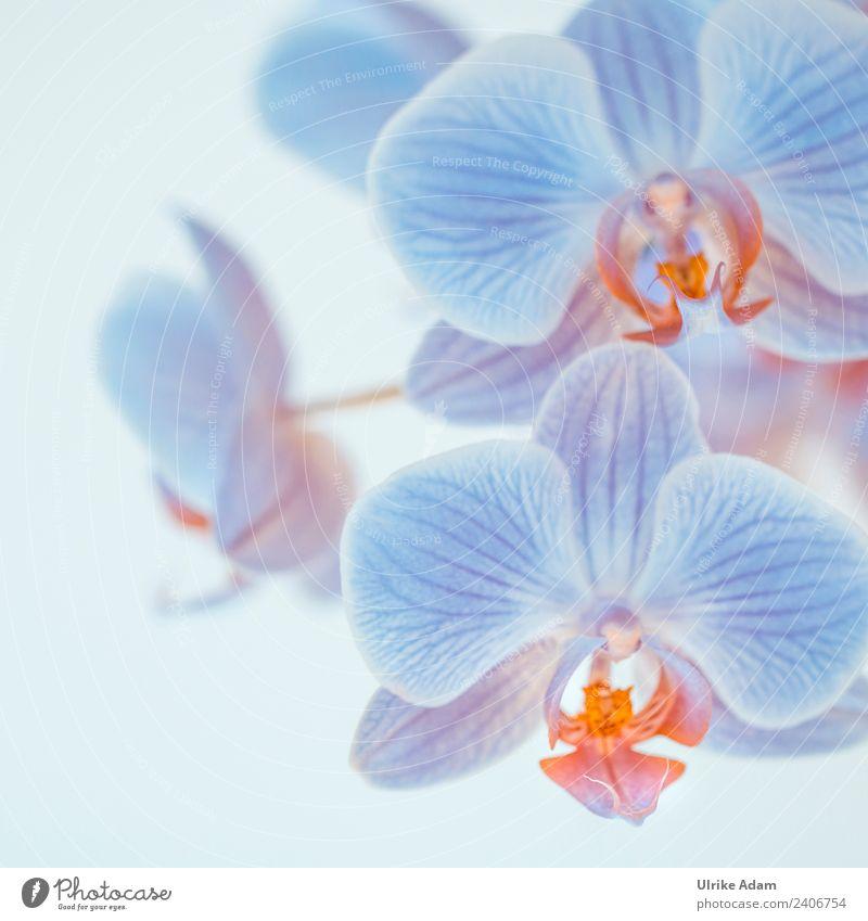 Blaue Orchideen Wellness Leben harmonisch Wohlgefühl Zufriedenheit Erholung ruhig Meditation Spa Massage Feste & Feiern Valentinstag Muttertag Hochzeit