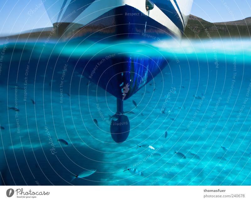 Drunter und Drüber - 200! blau Wasser Ferien & Urlaub & Reisen Sommer Meer Schwimmen & Baden Zufriedenheit glänzend ästhetisch Wasserfahrzeug Perspektive Fisch