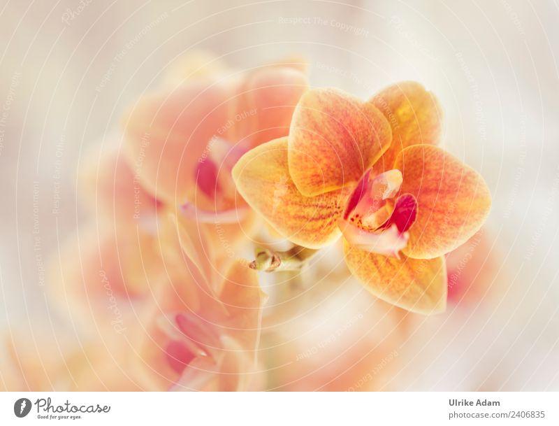 Orange Orchideen elegant Design Wellness Leben harmonisch Wohlgefühl Zufriedenheit Erholung ruhig Meditation Kur Spa Dekoration & Verzierung Tapete Pflanze