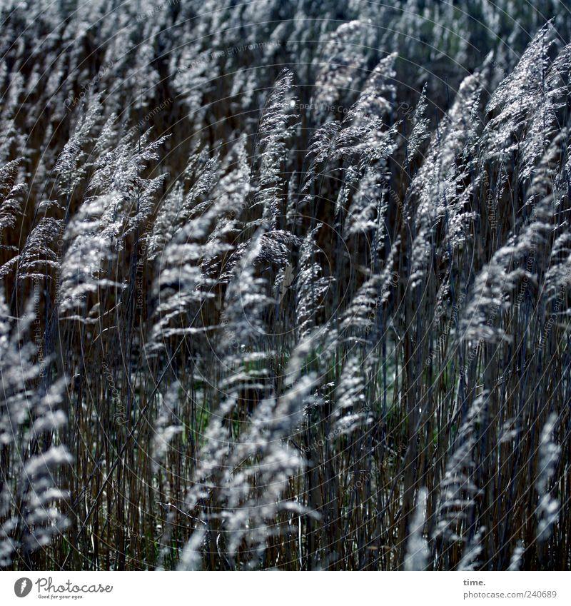 Spiekeroog | Community Natur Pflanze Umwelt Landschaft Bewegung Gras Zufriedenheit silber