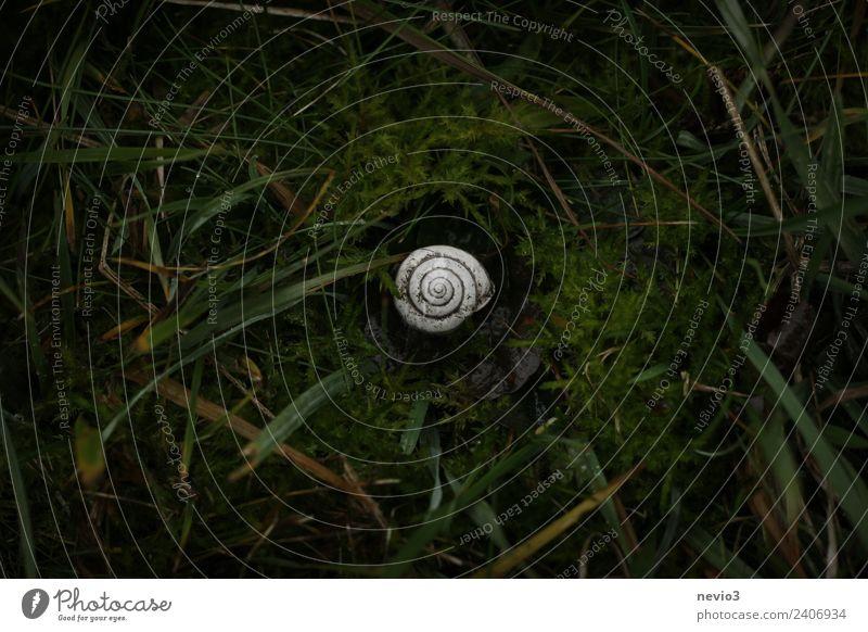 Schneckenhaus auf Moosboden Umwelt Natur Blatt Grünpflanze Nutzpflanze Garten Park Wiese 1 Tier schön klein rund grün weiß Mitte dunkelgrün natürliche Farbe