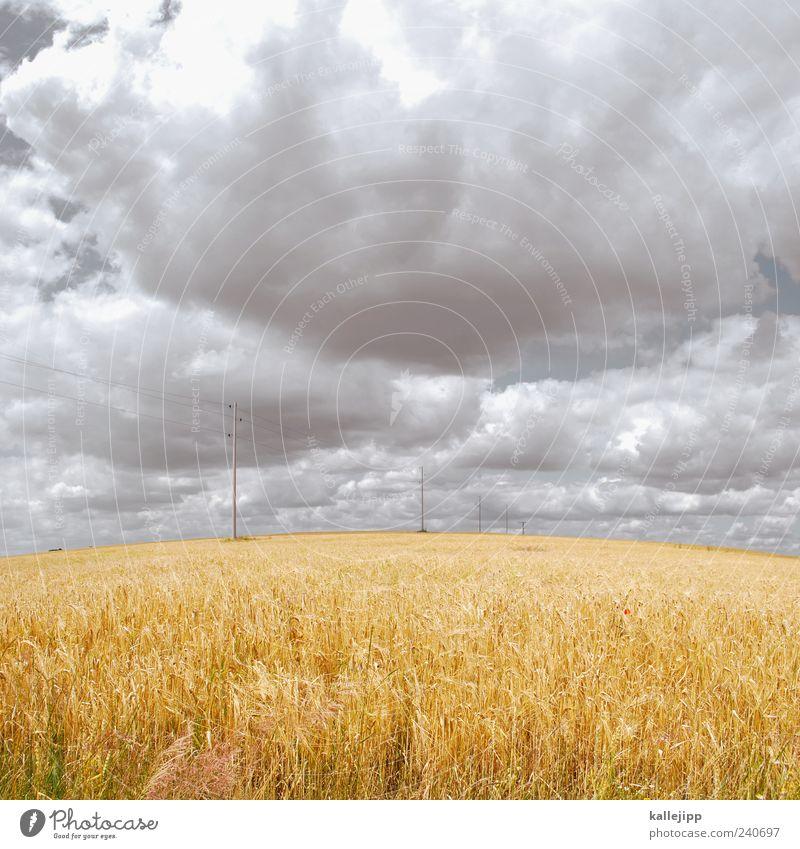 ferngespräch Umwelt Natur Landschaft Pflanze Luft Erde Wolken Sommer Klima Schönes Wetter Nutzpflanze Feld gelb gold Telekommunikation Leitung Netzwerk