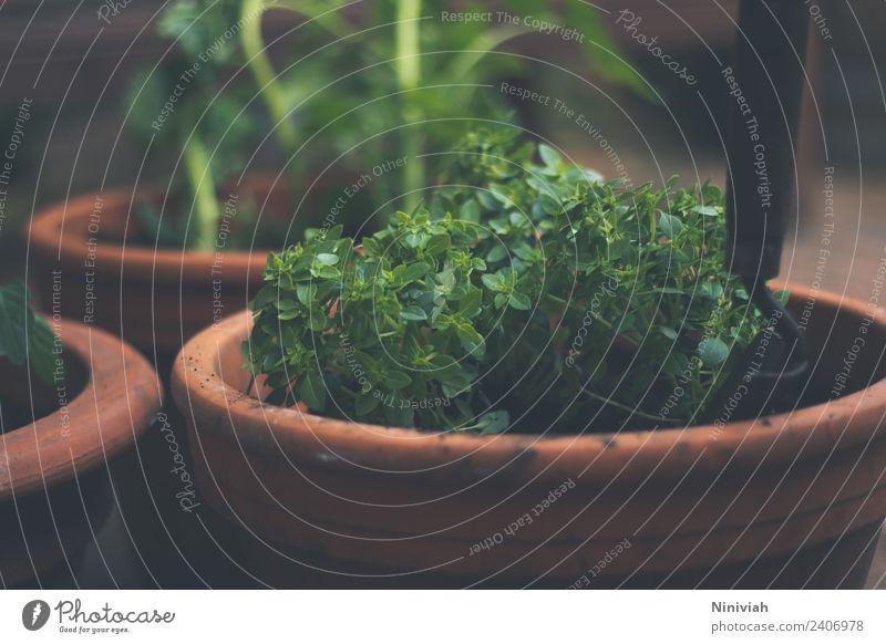 Kräuter eintopfen Farbfoto Außenaufnahme Nahaufnahme Gesunde Ernährung Wohlgefühl Erholung Freizeit & Hobby Garten Mensch Mann Hand Natur Pflanze Nutzpflanze