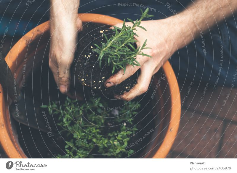 Gartenarbeit im Frühling Farbfoto Außenaufnahme Nahaufnahme Gesunde Ernährung Gesundheit Wohlgefühl Erholung Freizeit & Hobby Mensch Mann Hand Natur Pflanze