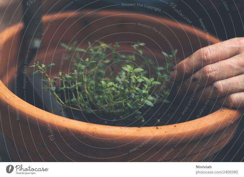Gartenarbeit im Frühling Mensch Natur Mann Sommer Pflanze Gesunde Ernährung Hand Erholung Gesundheit Freizeit & Hobby Frucht Wachstum frisch Kräuter & Gewürze