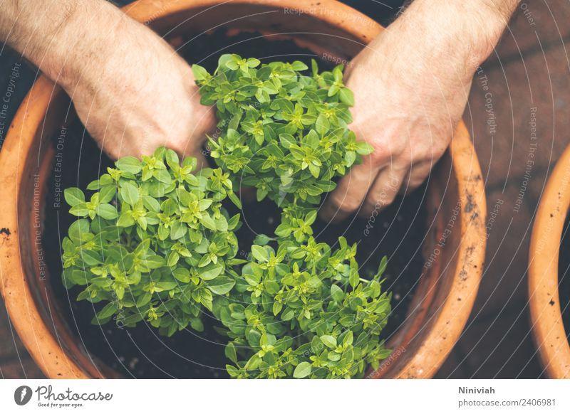 Gartenarbeit im Frühling Gesundheit Gesunde Ernährung Wohlgefühl Zufriedenheit Sinnesorgane Erholung Mensch maskulin Hand Natur Pflanze Nutzpflanze Topfpflanze
