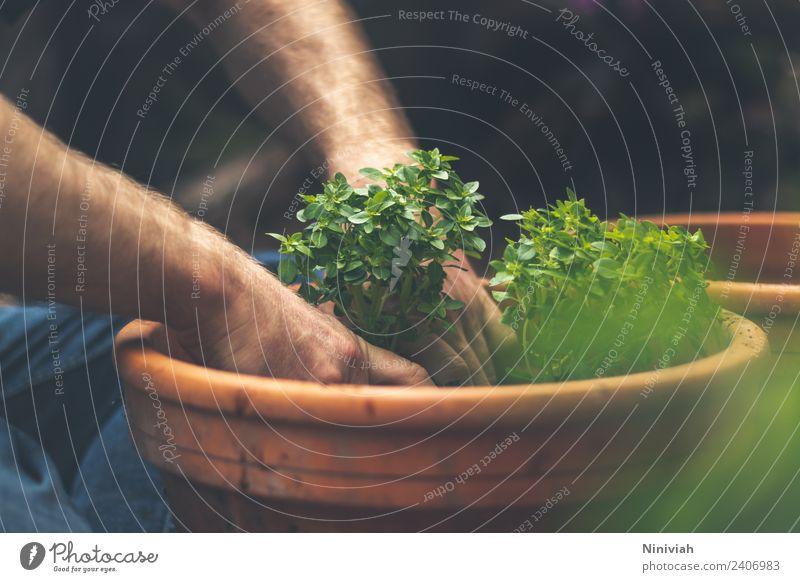 Gartenarbeit im Frühling - Basilikum eintopfen Mensch Natur Sommer Pflanze Gesunde Ernährung Hand Erholung ruhig Gesundheit natürlich Freizeit & Hobby
