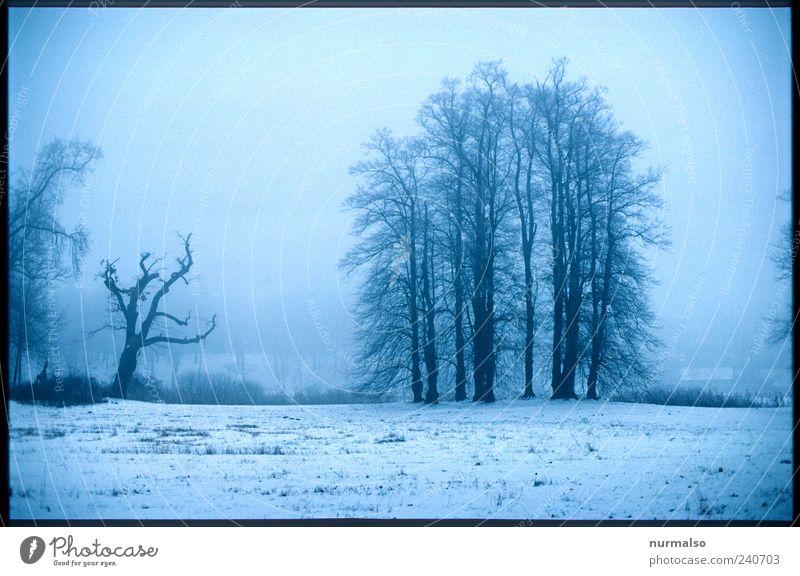 trübe aussicht Natur Baum Winter ruhig Erholung Wald Ferne Umwelt Landschaft dunkel Wiese kalt Schnee Traurigkeit träumen Park