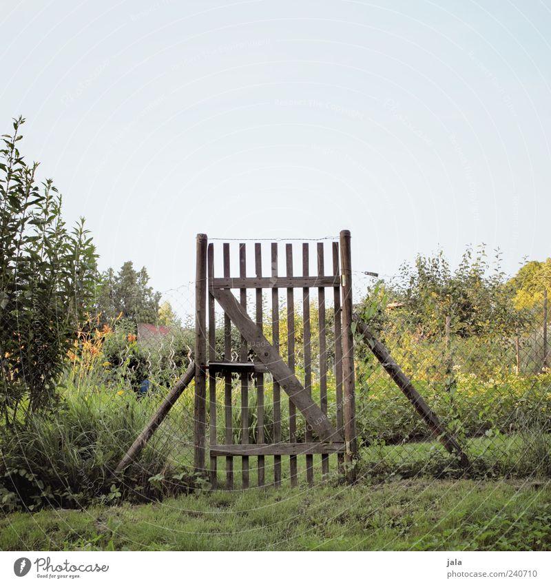gatter Natur Himmel Pflanze Baum Blume Gras Sträucher Grünpflanze Feld Zaun Pferch schön Farbfoto Außenaufnahme Menschenleer Textfreiraum oben