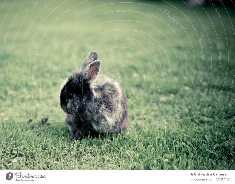 Super Cooper !!! Tier Freiheit klein Garten natürlich frei Coolness niedlich Fell Freundlichkeit Hase & Kaninchen Haustier Nagetiere Fellpflege