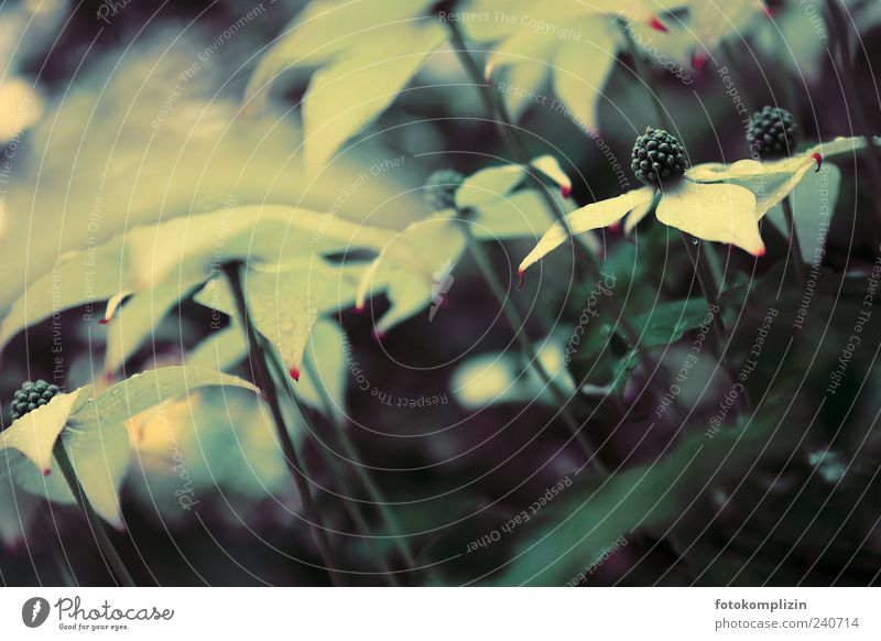 Baumblütenwald Natur weiß schön Pflanze Sommer Blume Frühling Blüte Garten Park Zeit elegant ästhetisch einzigartig Idylle Vergänglichkeit