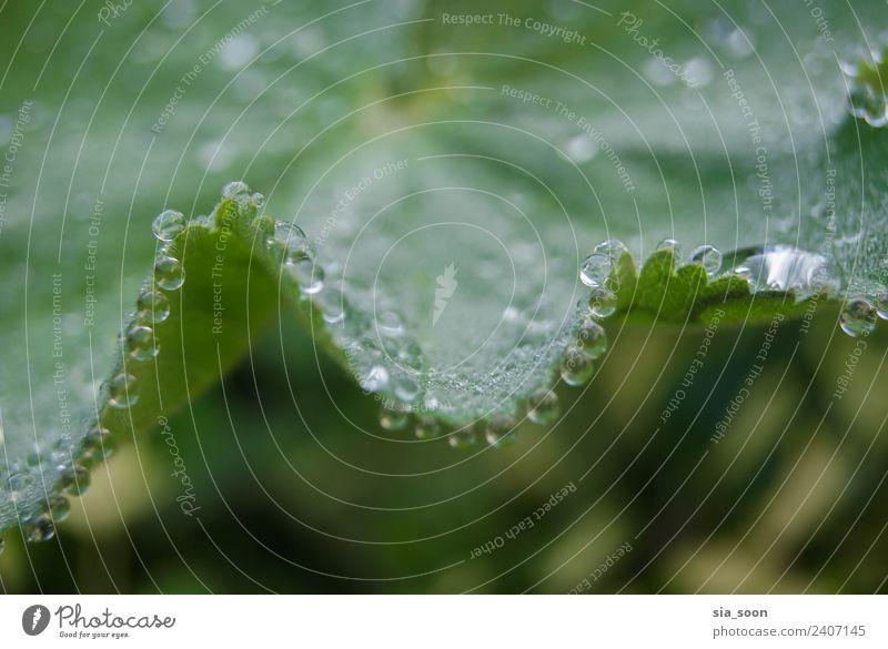 Morning Natur Pflanze Wassertropfen Herbst Blatt Grünpflanze Stadtrand Tropfen Hoffnung Idylle nachhaltig Farbfoto Außenaufnahme Detailaufnahme Makroaufnahme