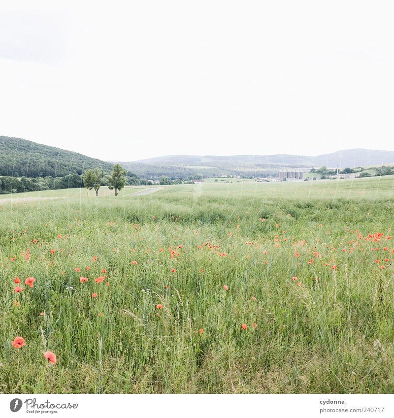 Ein weites Feld harmonisch Wohlgefühl Erholung ruhig Ausflug Ferne Freiheit Umwelt Natur Landschaft Himmel Sommer Wiese Hügel Einsamkeit einzigartig Horizont