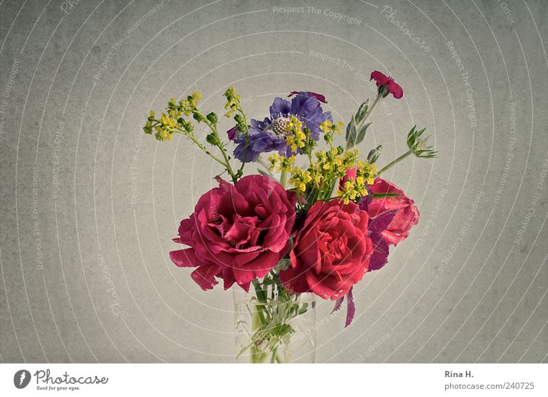 SommerBlumenStrauß II schön Blüte Stil Fröhlichkeit ästhetisch Häusliches Leben Lifestyle Rose Blühend Blumenstrauß Stillleben Vase Blumenvase Blütenstauden