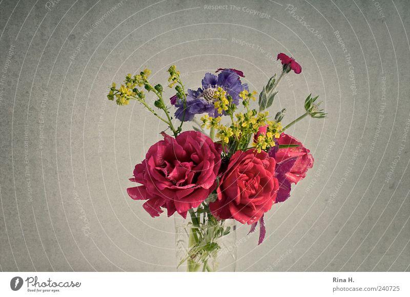 SommerBlumenStrauß II schön Blume Blüte Stil Fröhlichkeit ästhetisch Häusliches Leben Lifestyle Rose Blühend Blumenstrauß Stillleben Vase Blumenvase Blütenstauden