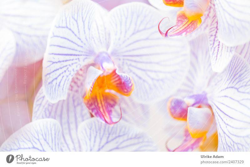 Orchideen elegant Design Wellness Leben harmonisch Wohlgefühl Zufriedenheit Sinnesorgane Erholung ruhig Meditation Kur Spa Tapete Feste & Feiern Natur Pflanze