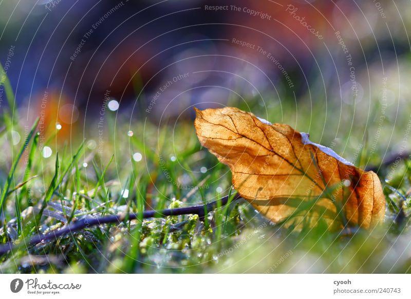 Farbenpracht Natur blau alt grün Pflanze Blatt Wiese Herbst Gras Frühling braun Erde gold glänzend nass frisch