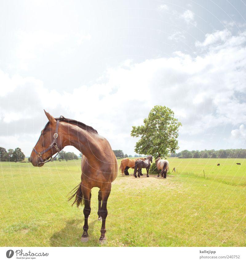 schattenparker Landwirtschaft Forstwirtschaft Umwelt Natur Landschaft Pflanze Baum Wiese Tier Nutztier Pferd 4 Tiergruppe Herde nachhaltig Weide Viehtränke