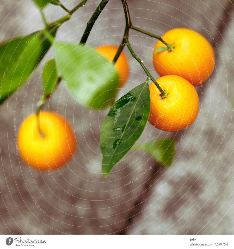 orangen Natur schön Baum Pflanze Lebensmittel Blüte orange Frucht Orange Nutzpflanze Zierde
