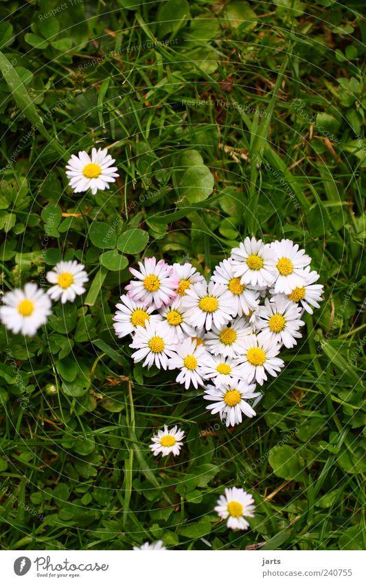...von herzen... Natur Pflanze Blume Wiese Leben Gras Herz natürlich Schönes Wetter Gänseblümchen Valentinstag Gruß Glückwünsche Feste & Feiern herzförmig