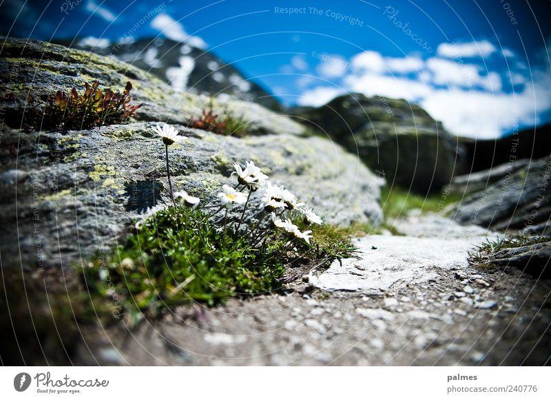 sonniges plätzchen Ferien & Urlaub & Reisen Pflanze Sommer Berge u. Gebirge Gras Stein Felsen Ausflug Alpen Gänseblümchen Moos Frühlingsgefühle
