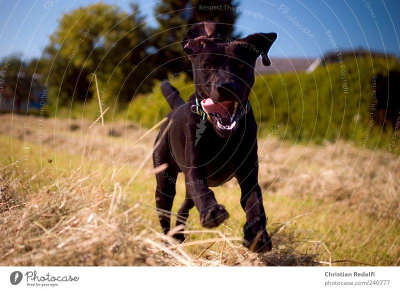doglife Hund Himmel Natur Sommer Tier Landschaft Wiese Spielen Gras Glück springen Feld wild Fröhlichkeit Unendlichkeit Tiergesicht