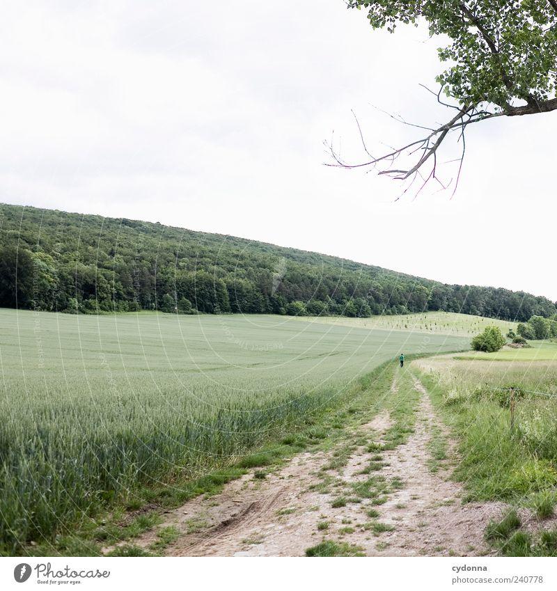 Feldweg Leben Wohlgefühl Erholung ruhig Ausflug Ferne Freiheit Umwelt Natur Landschaft Himmel Sommer Baum Wiese Wald Hügel Wege & Pfade Bewegung Einsamkeit